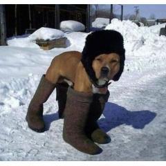 Собака в валенках